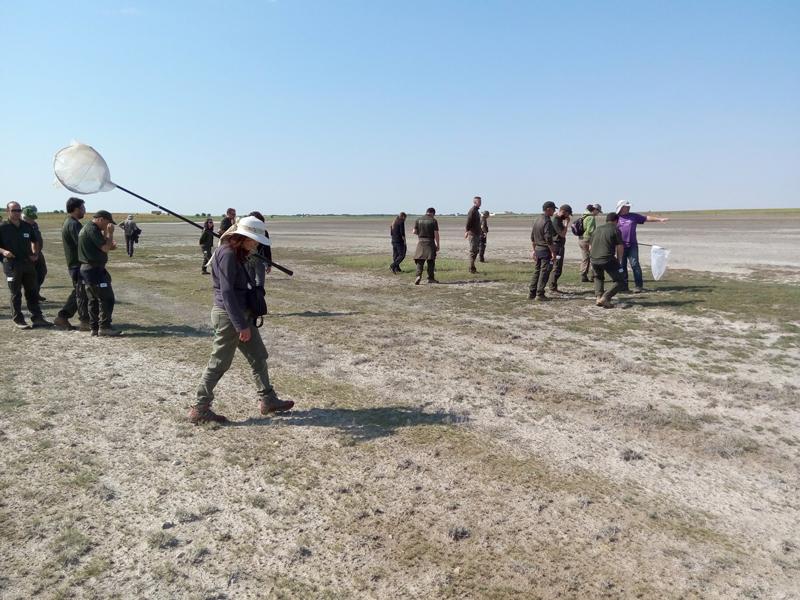 Los agentes medioambientales de la Junta de Comunidades de Castilla-La Mancha se implican en la conservación de insectos