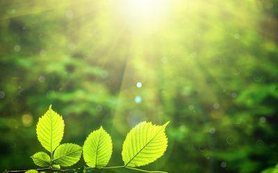 Apoyo del MITECO a la Fundación Global Nature en su labor investigadora