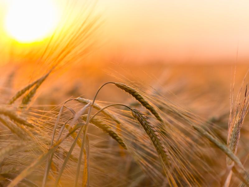 El Foro de Acción Rural presenta una serie de propuestas para mejorar la participación y gobernanza en el medio rural