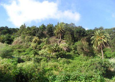 Bosques canarios