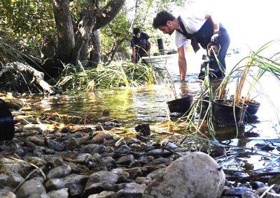 Conservación de plantas acuáticas