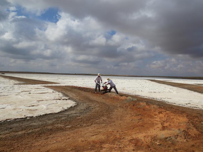 Restauración. Eliminación de diques en Laguna de Peña Hueca. Villacañas.