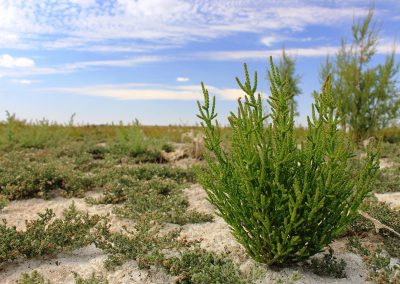 The Wetlands of La Mancha LIFE project