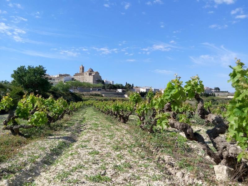Viticultura Valencia 001
