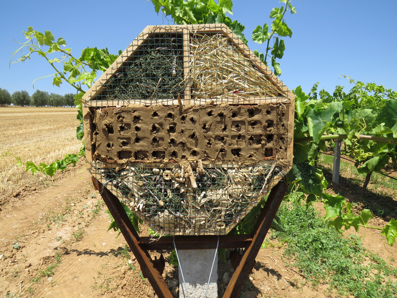 Viticultura turquia 002