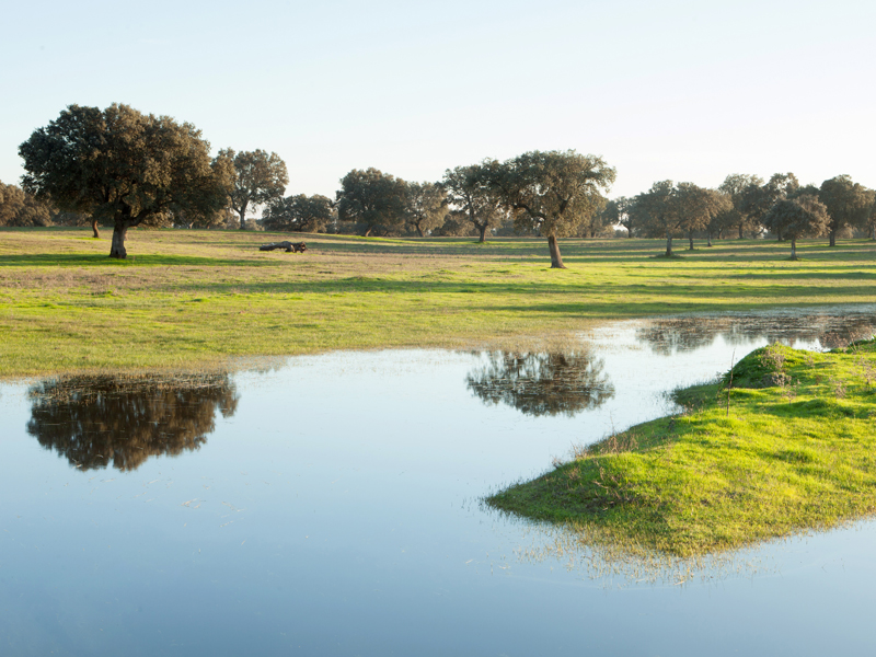 The pastures of Extremadura in Spain. Beautiful landscape with g