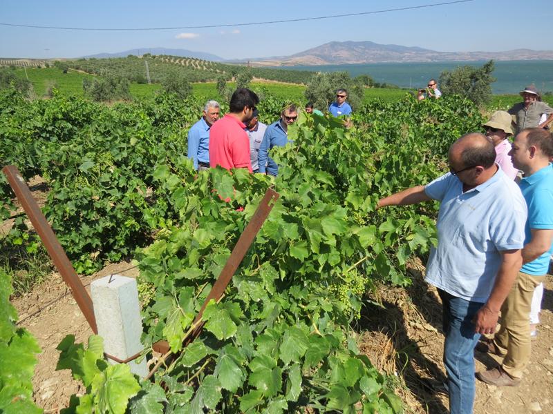 viticultura Turquia 001