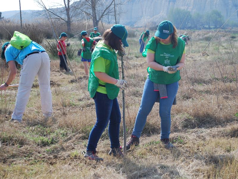 120 voluntarios de DKV Seguros plantan 580 árboles en la ribera del río Gállego