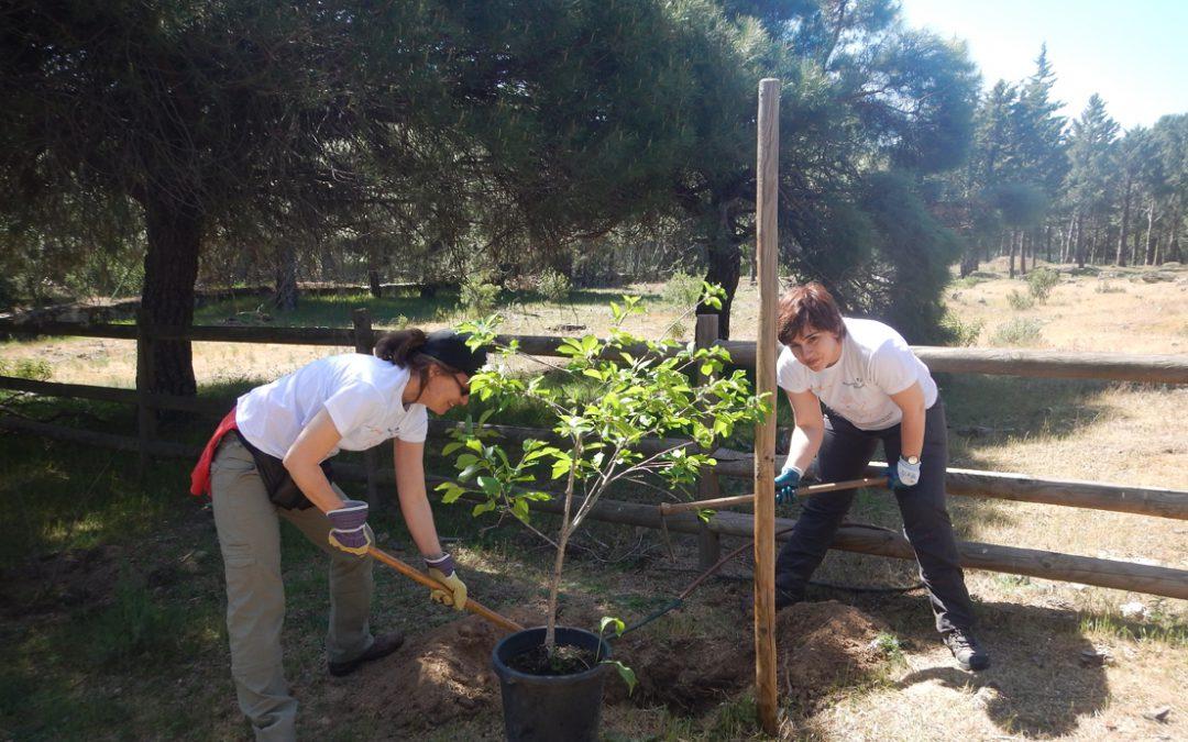 Voluntarios de Gas Natural Fenosa contribuyen a mejorar el entorno natural de la Pedriza en la Sierra de Guadarrama