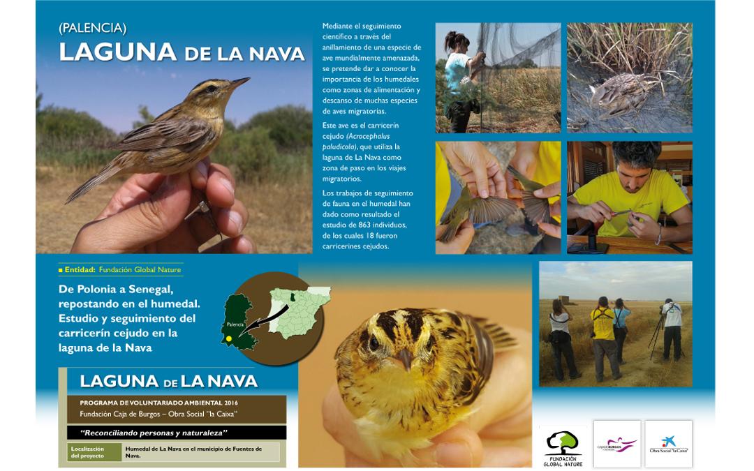 Convocatoria de voluntariado Ambiental en la laguna de La Nava (Palencia)