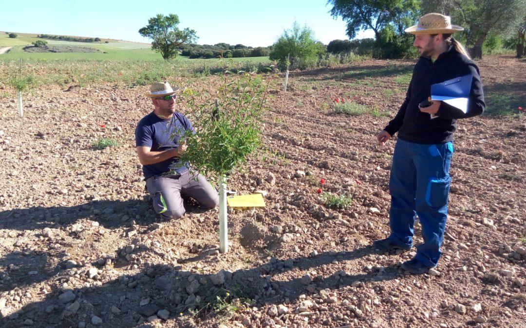 Más de 1.500 hectáreas de cultivo se han sumado ya a la Red de Custodia Agraria para la protección de la naturaleza castellanomanchega