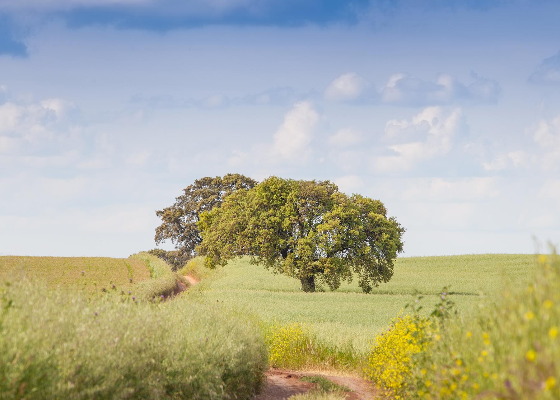 Fundación Global Nature colabora en el blog ECOlógica de eldiario.es