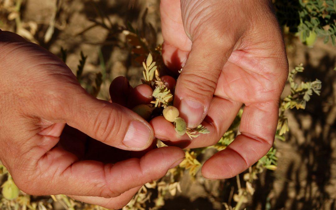 """""""Promoción de productos agrícolas sostenibles a través de Natura 2000"""" finalista de los premios Red Natura 2000"""