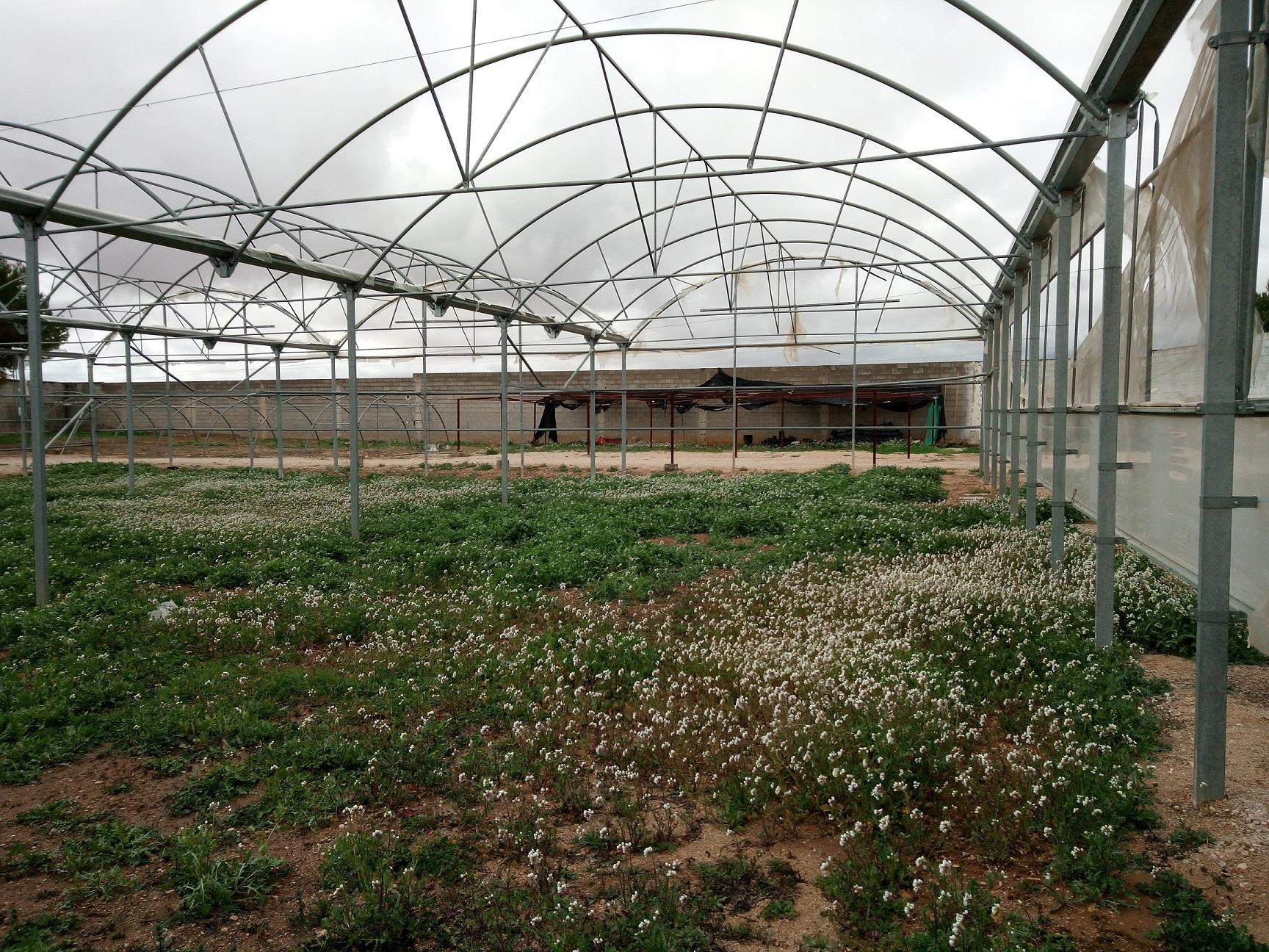 Alumnos de Castilla-La Mancha ayudan a recuperar la biodiversidad agrícola de la región de la mano de Global Nature y Ecoembes