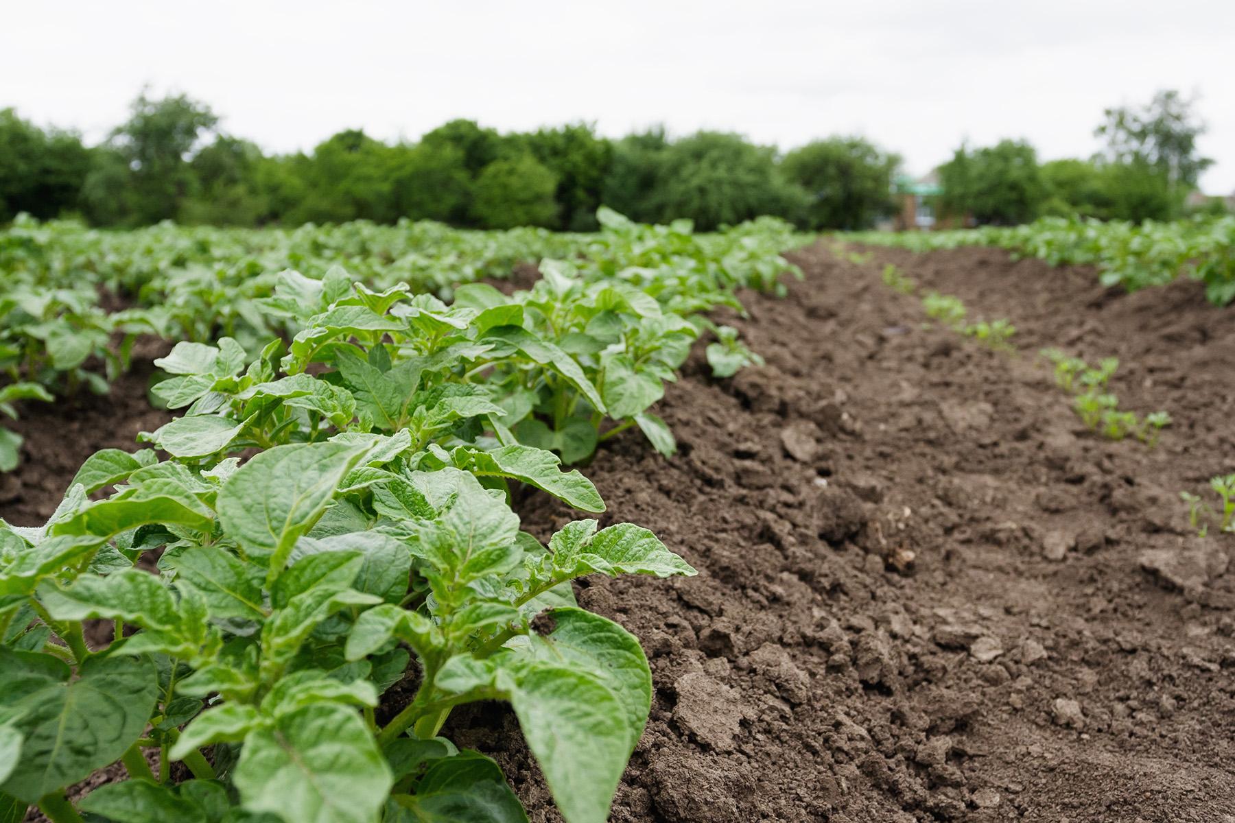 """Ya disponible la """"Guía de buenas prácticas de horticultura ecológica"""""""
