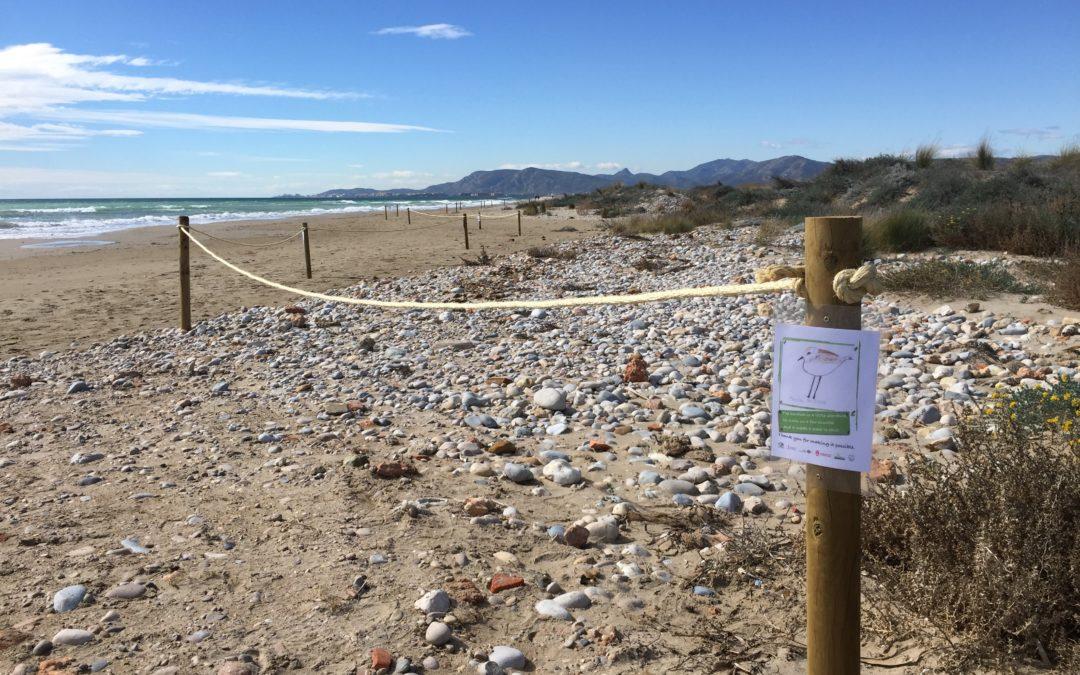 Publicado el informe sobre el trabajo colaborativo para la conservación del chortilejo patinegro en el Parque Natural Prat de Cabanes-Torreblanca