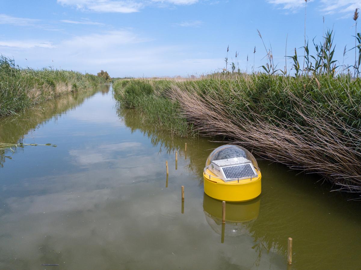 Un sistema de medición a tiempo real monitorizará el agua de l'Albufera