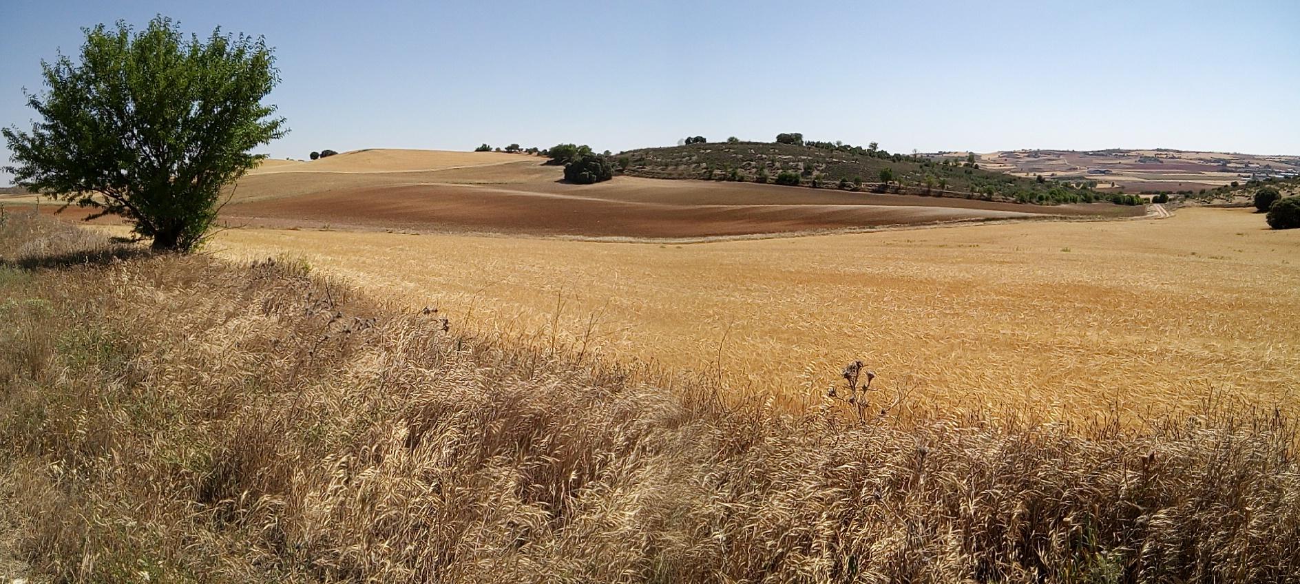 La Red de Custodia Agraria del proyecto LIFE Estepas de La Mancha para la protección de aves esteparias alcanza las 16.000 hectáreas