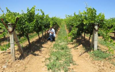 Erasmus+ recopila un centenar de prácticas aplicables a los viñedos europeos que fomentan la biodiversidad