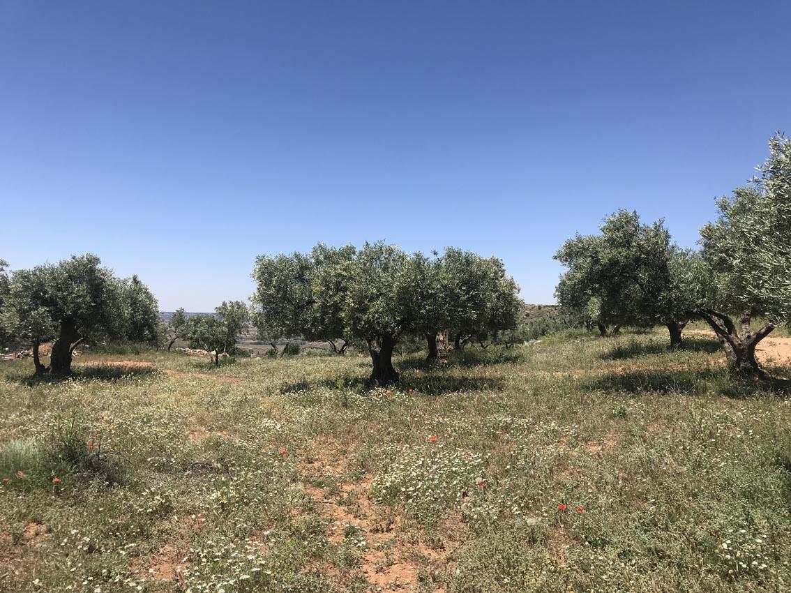 Cubierta olivar