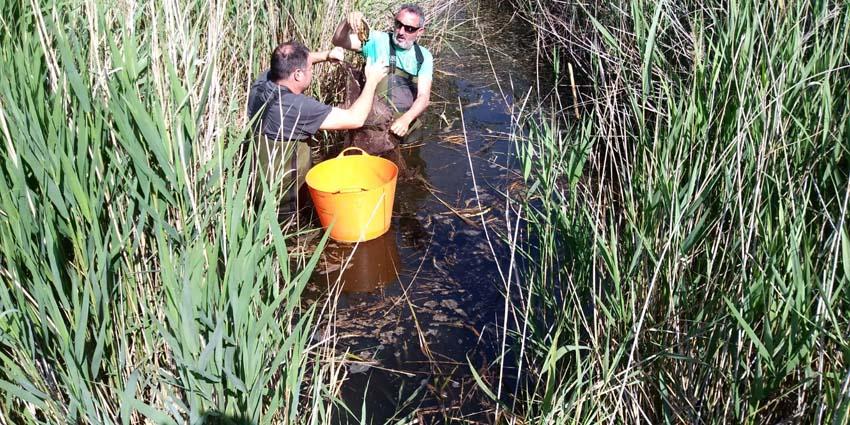 Un programa de voluntariado coordinado por FGN consigue retirar 43 ejemplares de galápagosde especies invasoras en Torreblanca