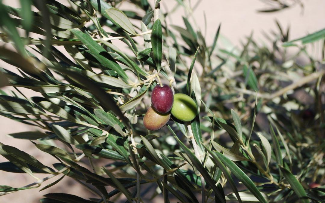 Abierto el plazo de inscripción para NaturAceite, dedicado al sector olivarero y la biodiversidad
