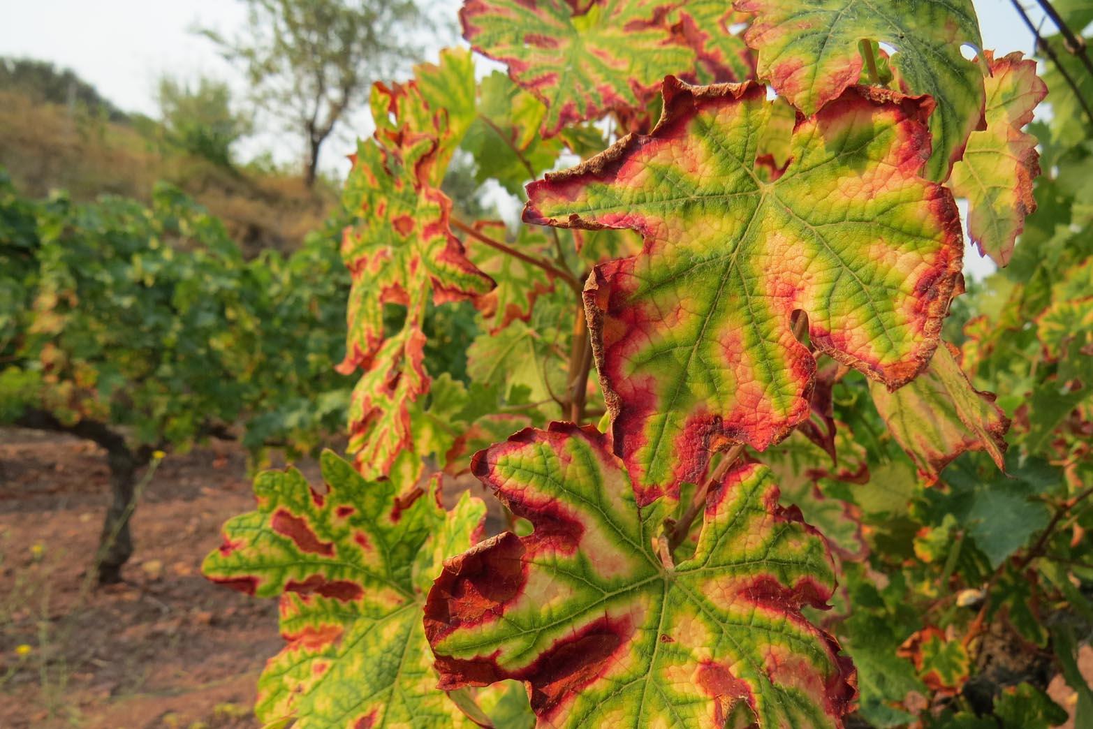 Abierto el plazo de inscripción para VinoDiversidad,dedicado a biodiversidad y cambio climático en el viñedo