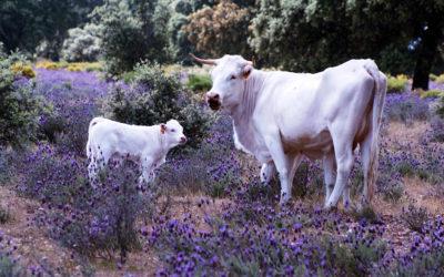 La RAS, GNF y FGN unen esfuerzos para promover la restauración y conservación de la biodiversidad en el sector agroalimentario