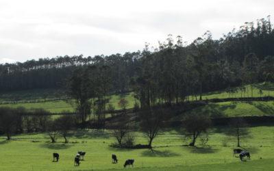 FGN aplaude que el informe del IPCC ponga el foco en la relación directa entre cambio climático y degradación del suelo