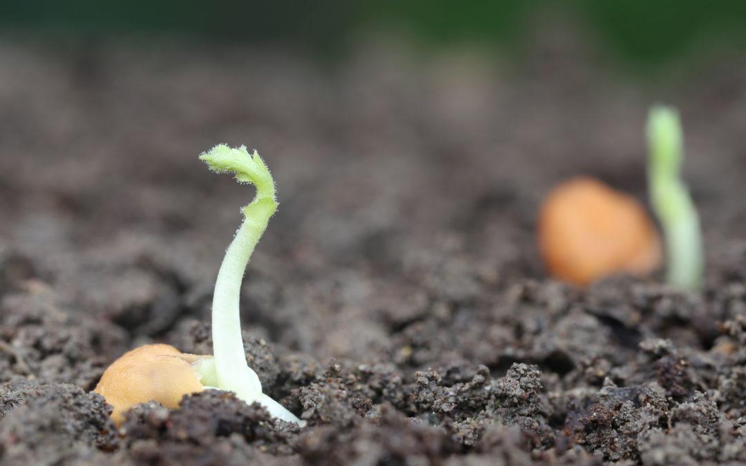 Día de la Agricultura: El futuro del sector pasa por la adaptación a retos como el cambio climático y a nuevos hábitos de consumo