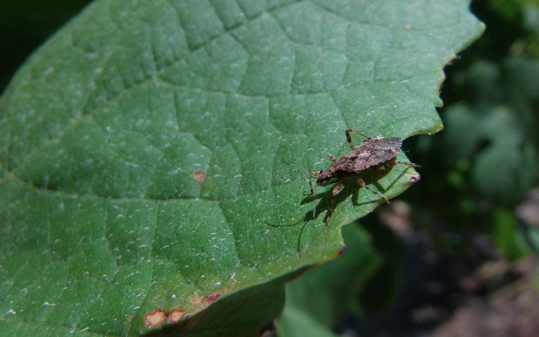 Cultivos que favorecen la presencia de insectos