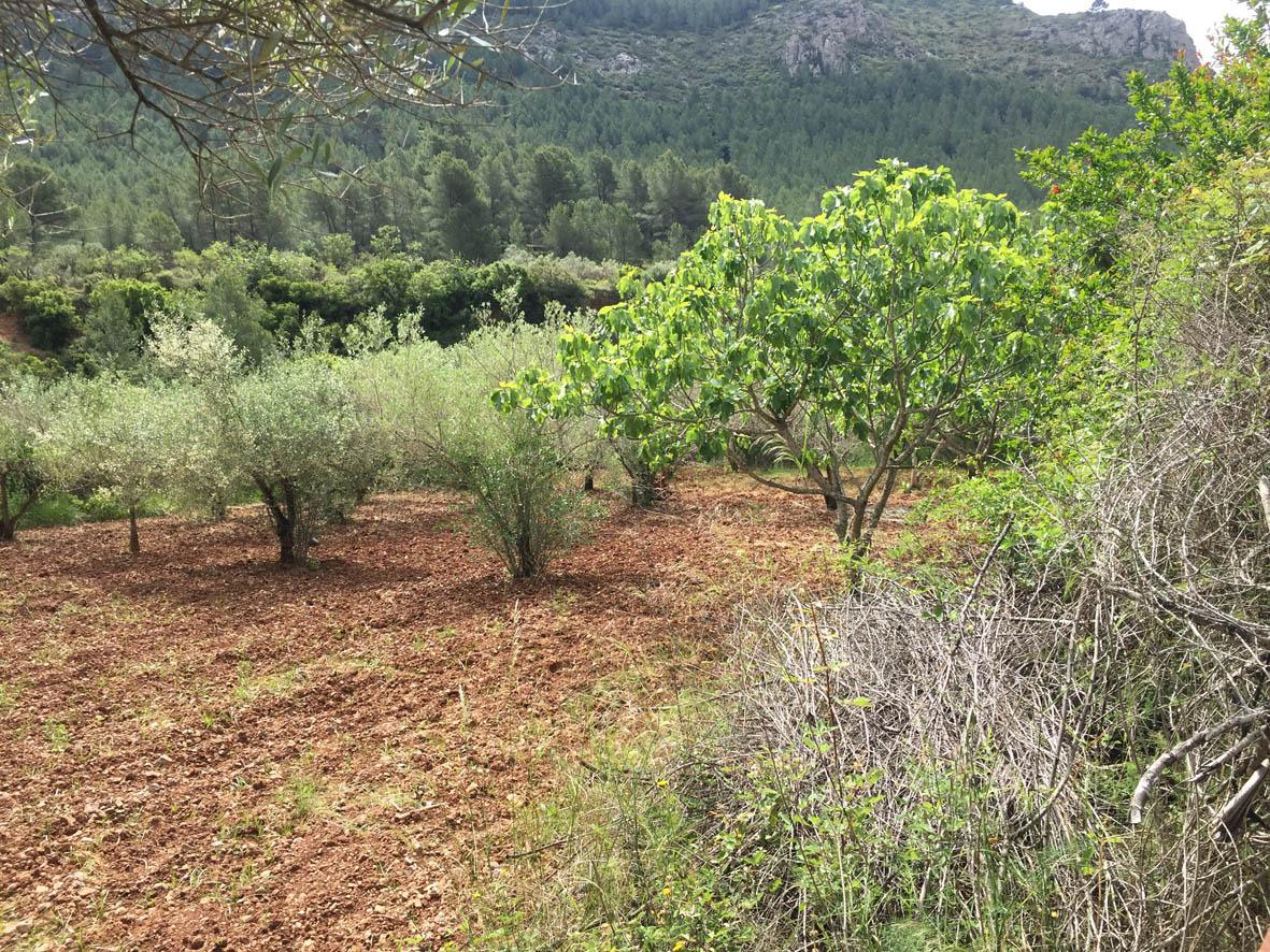 El proyecto Corta Fuegos Verdes cuenta  ya con 14 hectáreas de espacio protegido