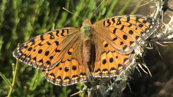 La dramática pérdida de biodiversidad, una crisis ambiental eclipsada por el cambio climático