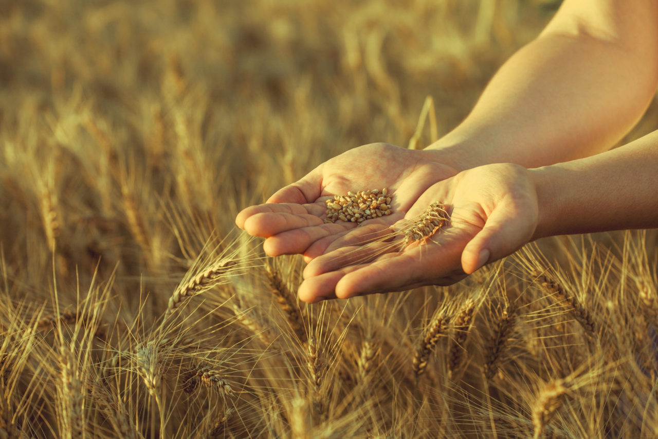 LIFE AgriAdapt, proyecto de adaptación al cambio climático, celebra su Conferencia final en Madrid