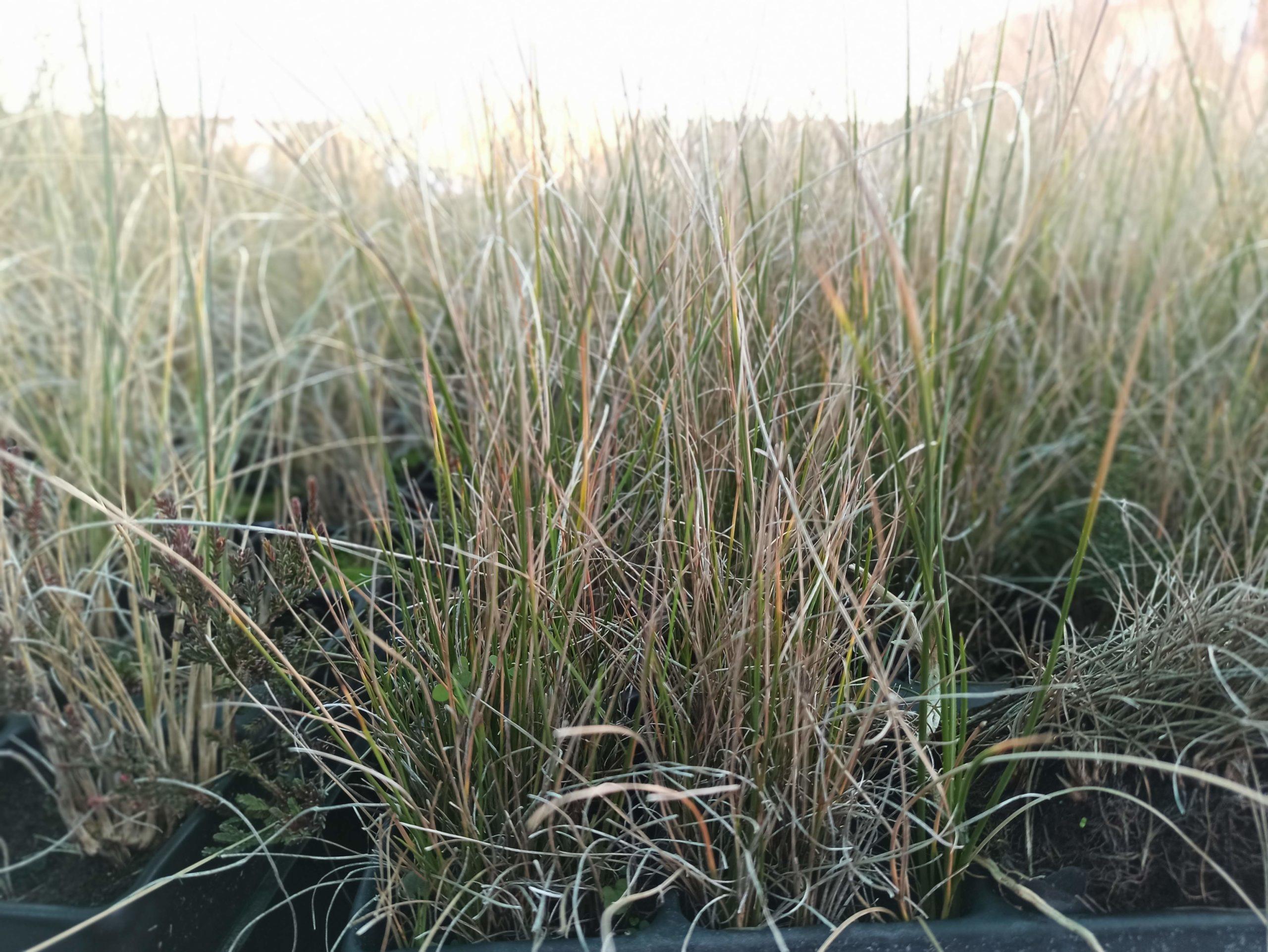 Miles de plantas aromáticas para atraer polinizadores y proteger la naturaleza