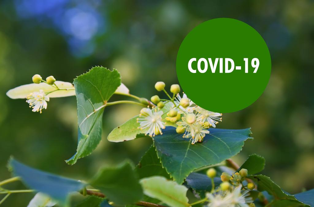 La cara verde de la crisis del COVID-19