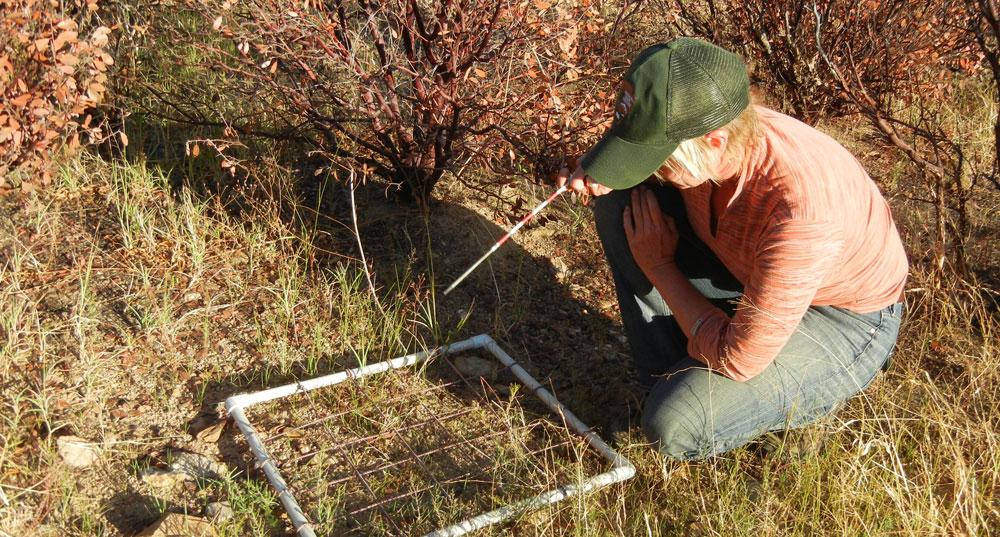 El Observatorio de la Biodiversidad Agraria, una apuesta de ciencia ciudadana
