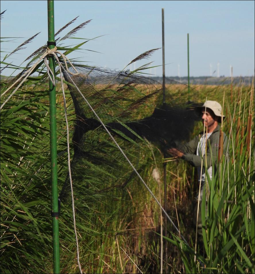 Voluntarios contribuirán al estudio de las lagunas de Tierra de Campos en Palencia