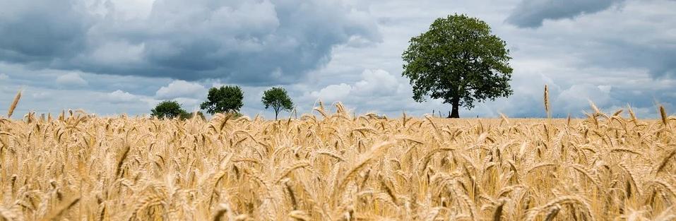 Webinars sobre diversidad biológica y el sector alimentario