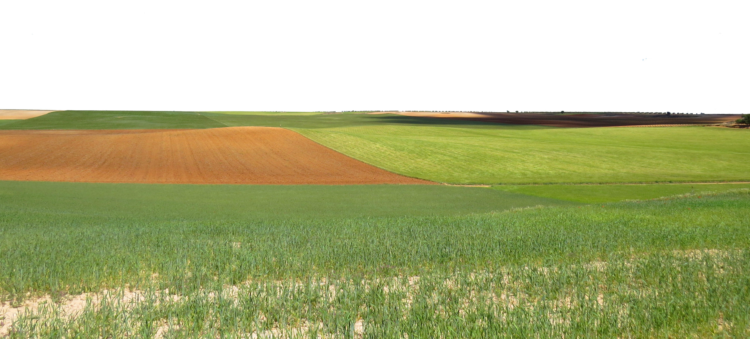 Creando red para para la conservación de nuestro paisaje agrario