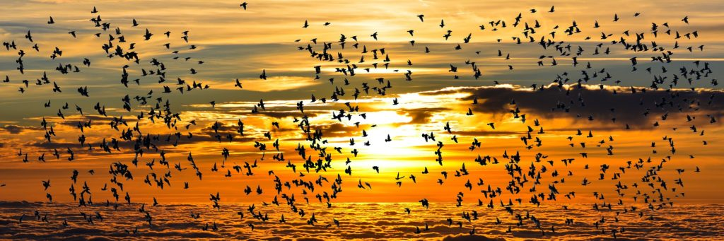 10/10 Dia Mundial de la Aves migratorias