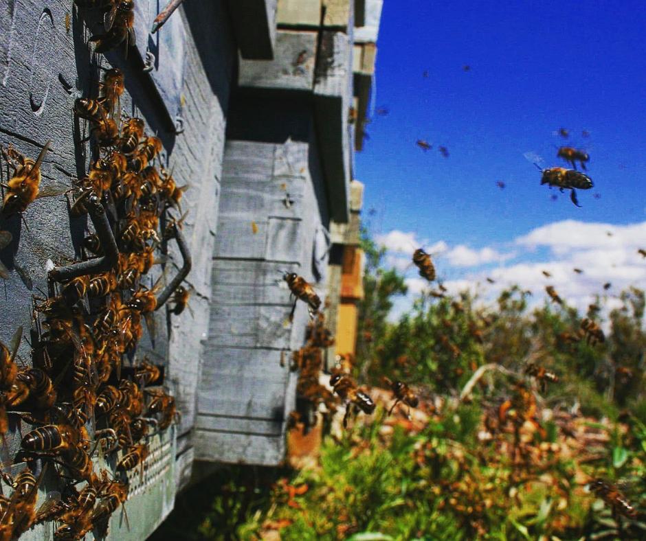 Un millón de firmas por una agricultura respetuosa con las abejas para un medio ambiente sano