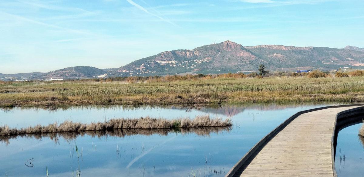 Fundación Global Nature retoma los trabajos de restauración en los humedales valencianos