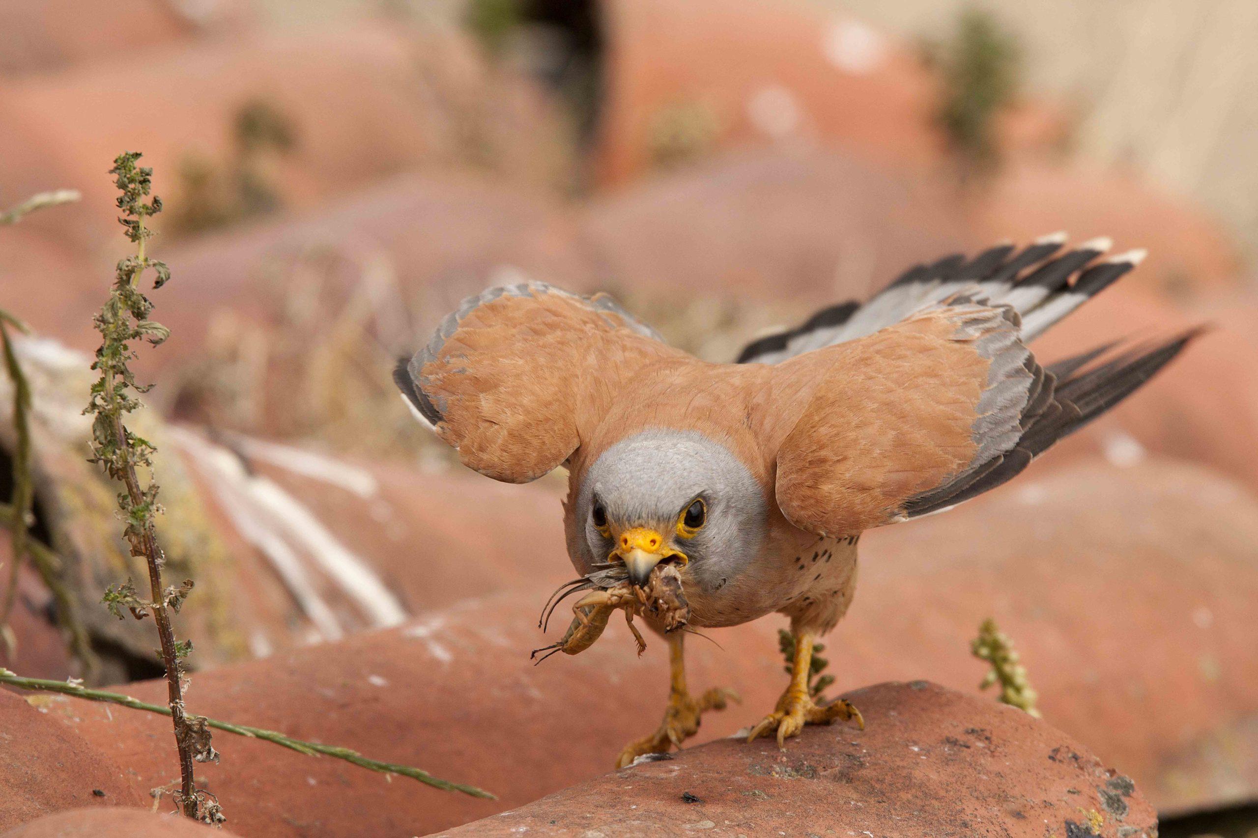 Vigilando la biodiversidad: especies que controlan plagas y benefician a la agricultura