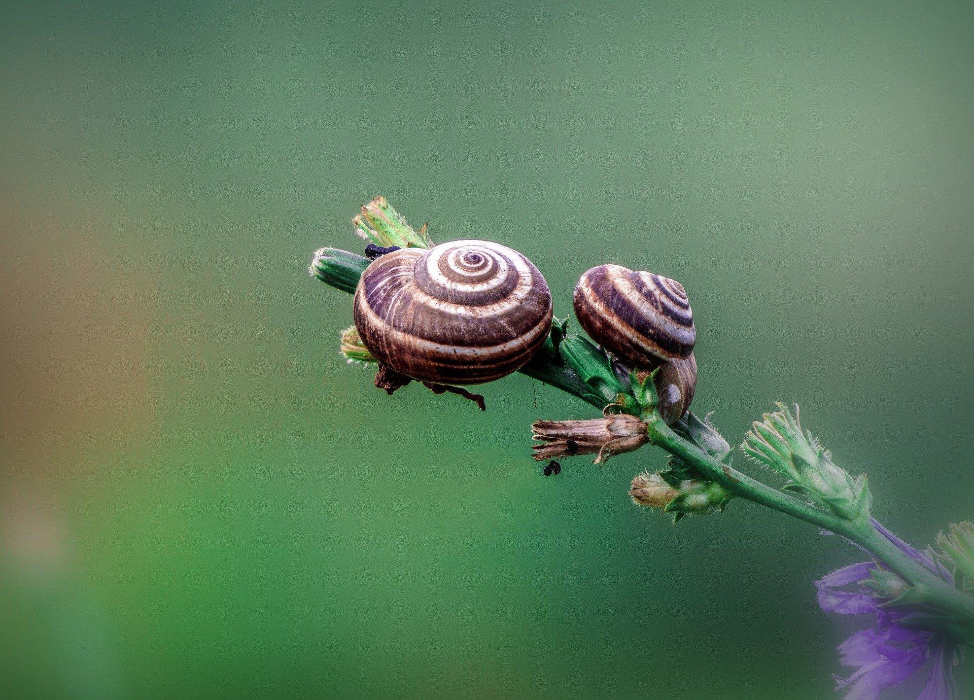 En marcha el Observatorio de la Biodiversidad Agraria