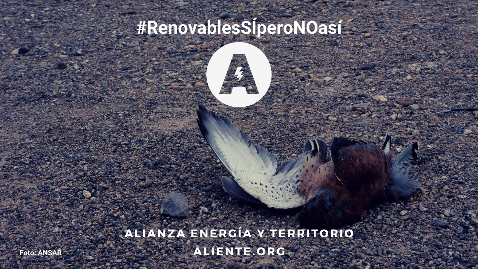 Nace Aliente para luchar por la biodiversidad frente a las renovables