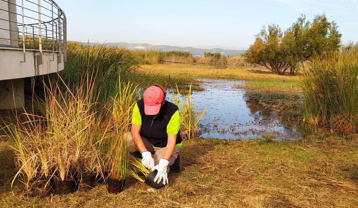 Plantaciones que ayudan a la conservación de fauna en las marjales valencianas