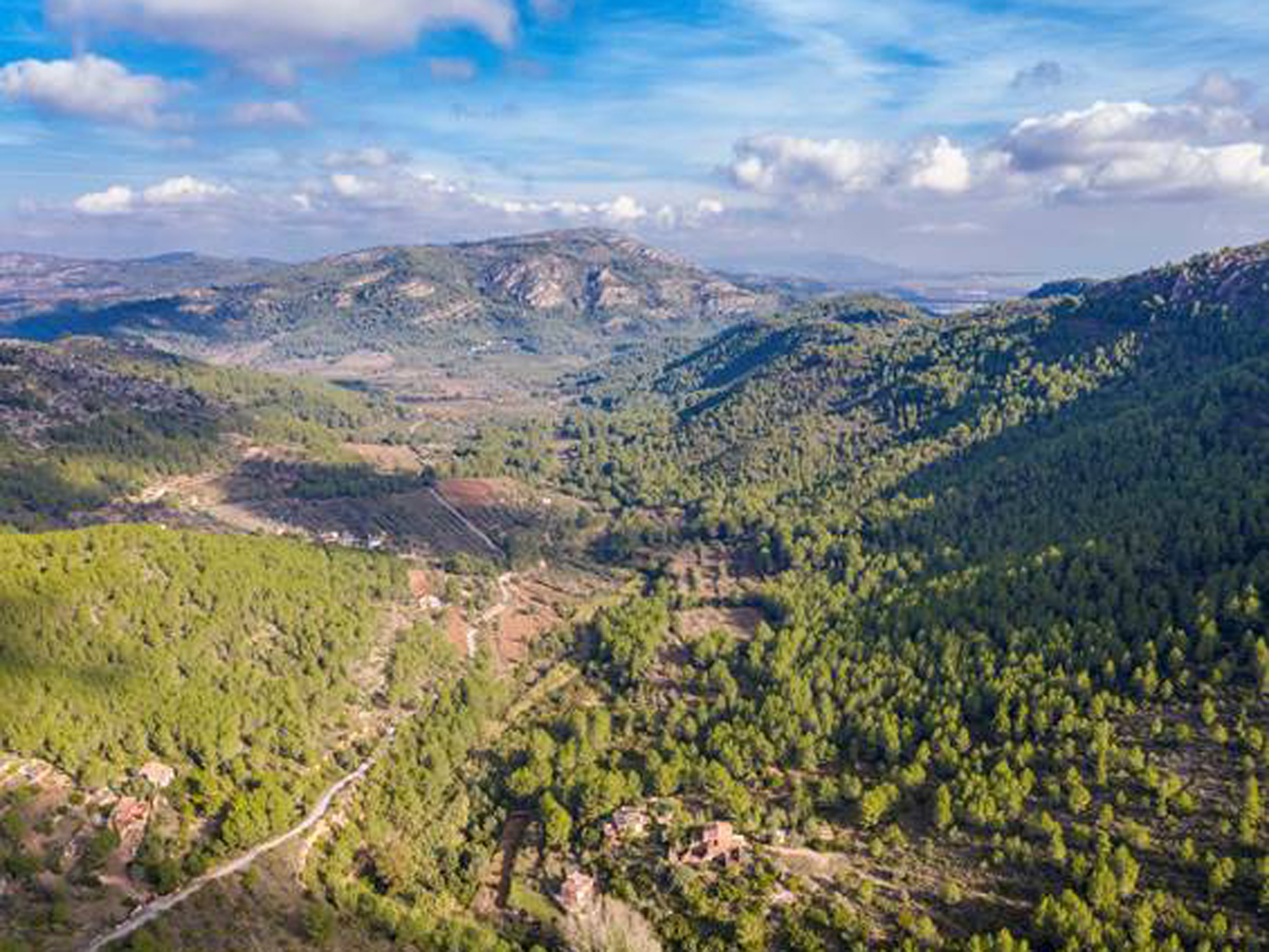 Zonas abandonadas de gran valor natural convertidas en Cortafuegos Verdes