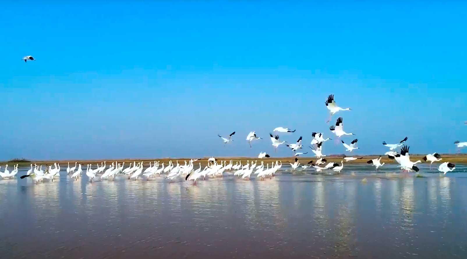 Reforzamos el compromiso internacional para la protección de lagos y humedales. Living lakes
