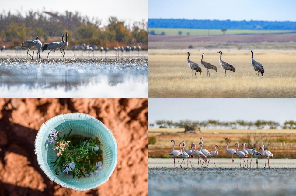 """LOEWE colabora con Fundación Global Nature con su proyecto """"A Casa for Birds"""""""
